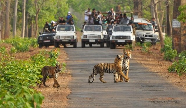 Ranthambore National Park Experience the Adventure with Top National Park in India